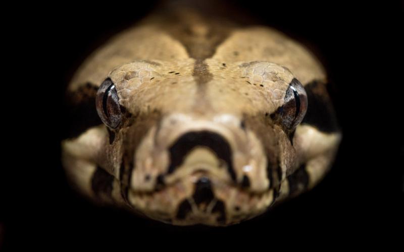Python-Featured